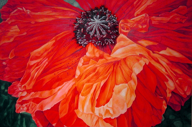 Poppy, Cadmium Orange. Oil canv - nancyht | ello