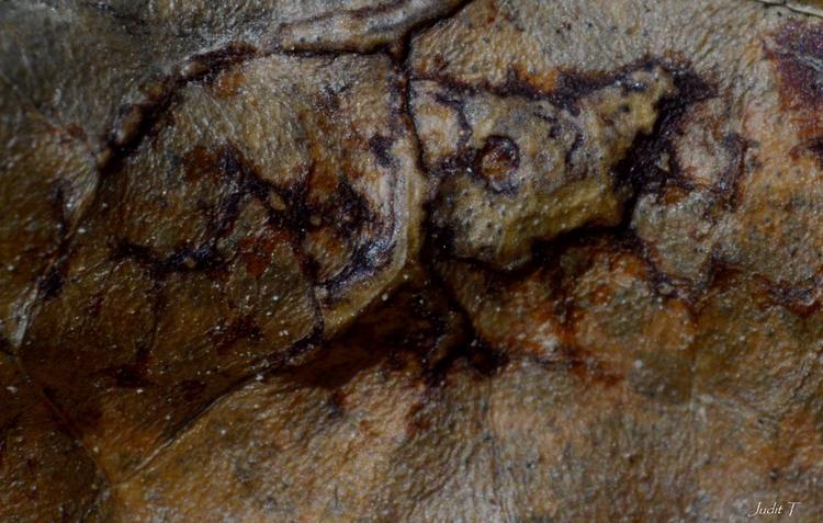textures, abstract, macro, pareidolia - jutebar | ello