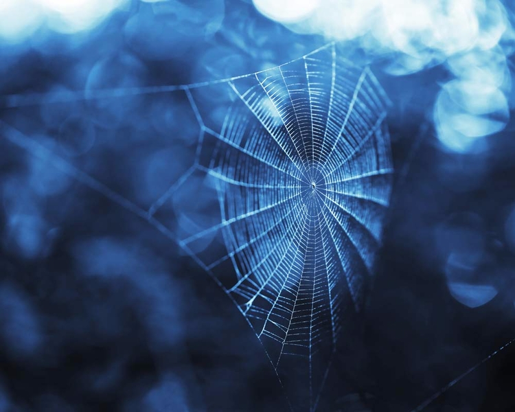 shot delicate spider web misty  - brookeryan | ello