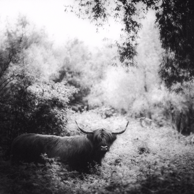 Forest - animals, blackandwhite - klaasphoto | ello