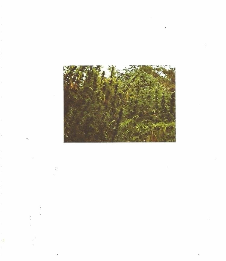 Collected Bookpage Photo 8x9 in - ellocannabis | ello