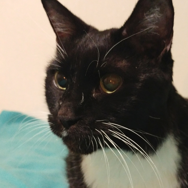 COMMENT SHARE BLACK CAT FRIDAY - snapcats | ello