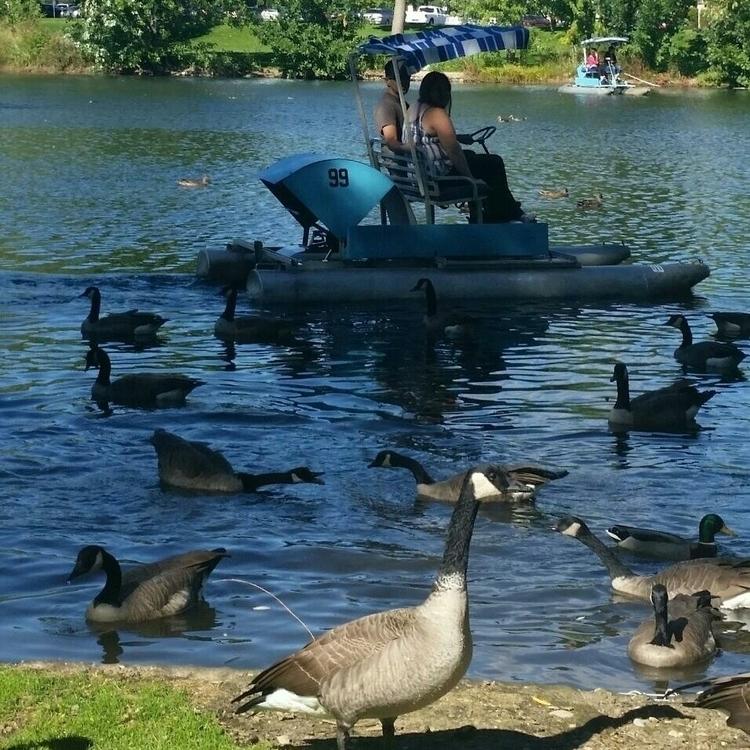 favorite birds...Canadian Geese - vickylorraine | ello