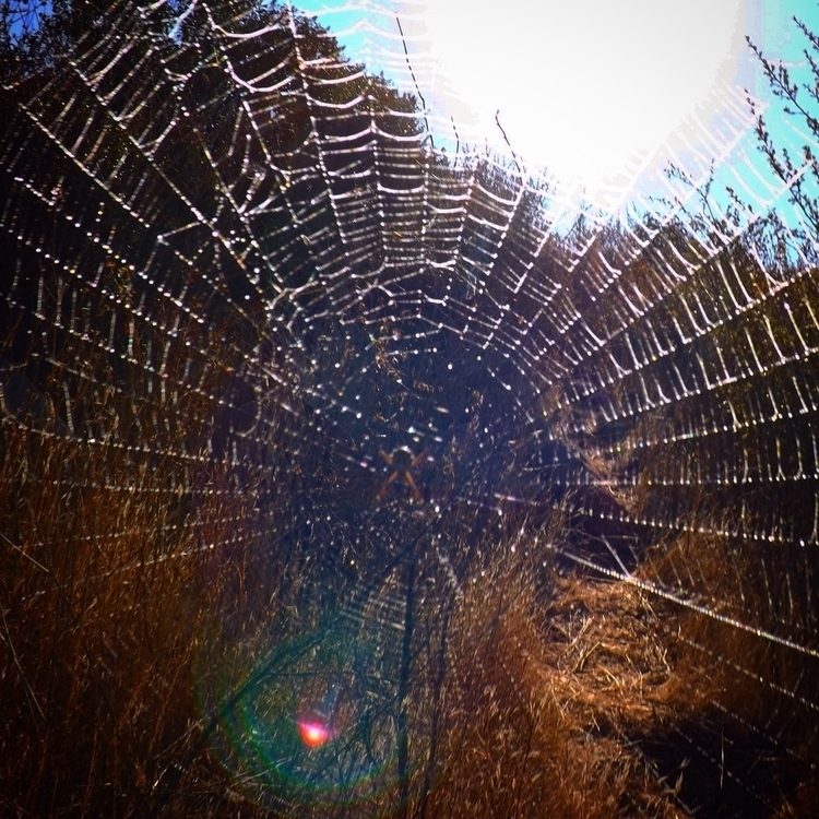 web life links failure success - alexgzarate | ello
