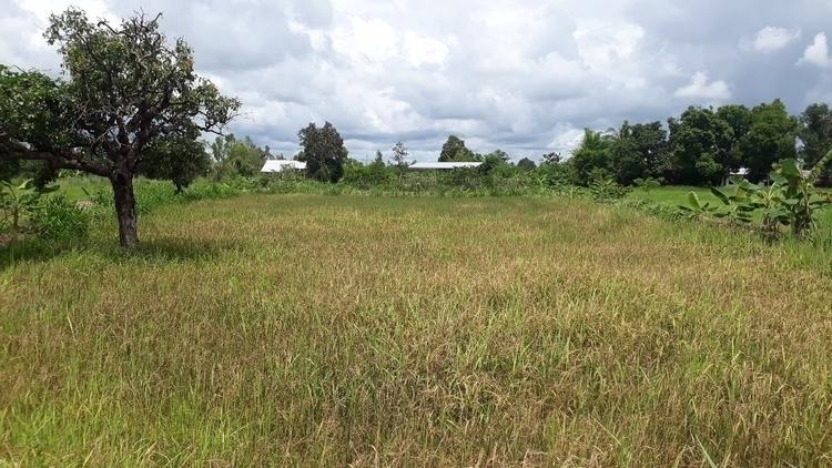 farm - kongoon | ello