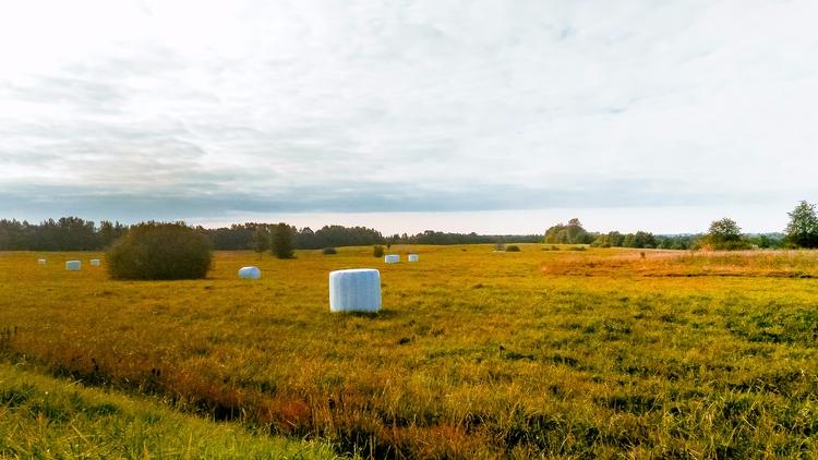 2017 - field, horizon, sky, nature - beheroght | ello