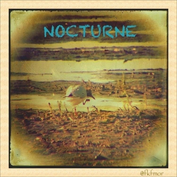 community - Nocturne, Folkmusic - fkfmor | ello