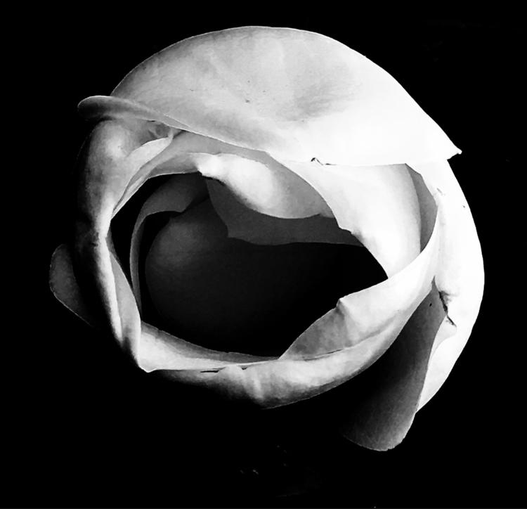 Dutch headscarf magnolia blosso - katemoriarty | ello