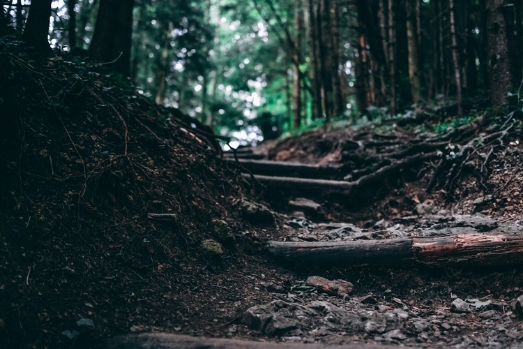 Wooden stairs middle forest - wood - captain_lukhasan | ello