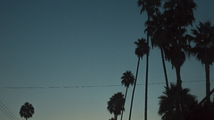cali - palmtrees, vibrant, sunset - kylie_hazzard_visuals | ello