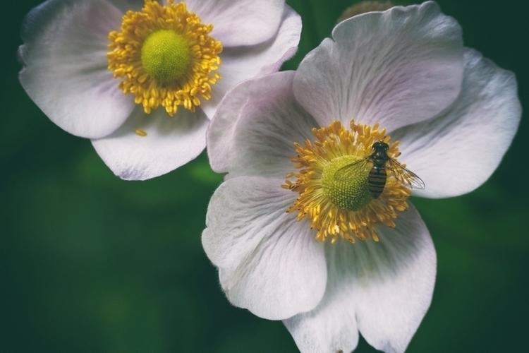 Landing site - photography, flowers - marcushammerschmitt | ello