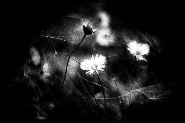splinters night - photography, bw - elhanans | ello