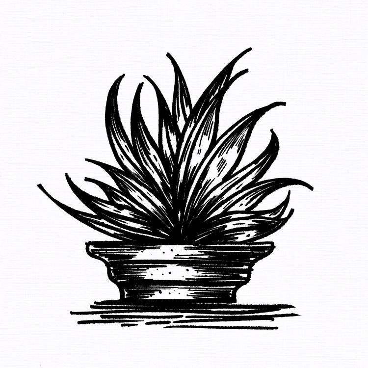02 —'Aloe Vera' — Follow updat - imponderably | ello