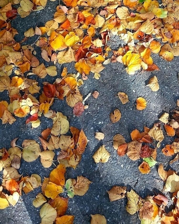 Leaves - colorful, leaves, autumn - aleksaleksa | ello