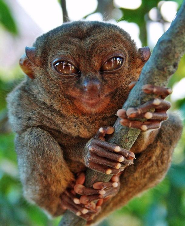 inspired smallest primate world - vicsimon | ello