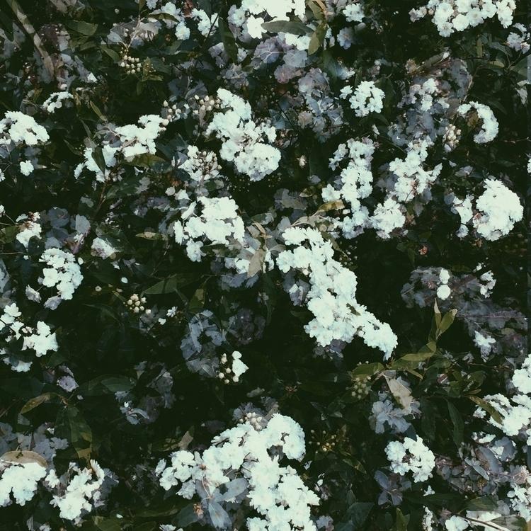 flower, instax, botanical, lomo - campfired | ello
