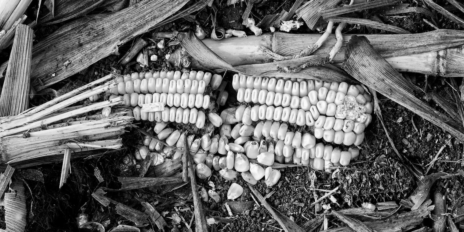 harvester missed  - blackandwhite - docdenny | ello