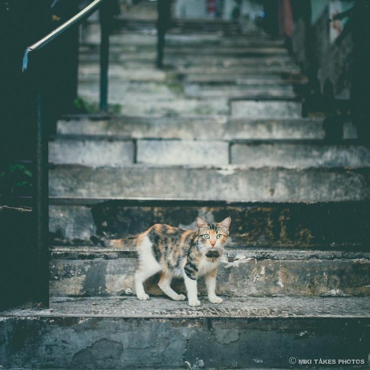 lookin' Istanbul, Turkey - photography - mikitakesphotos | ello