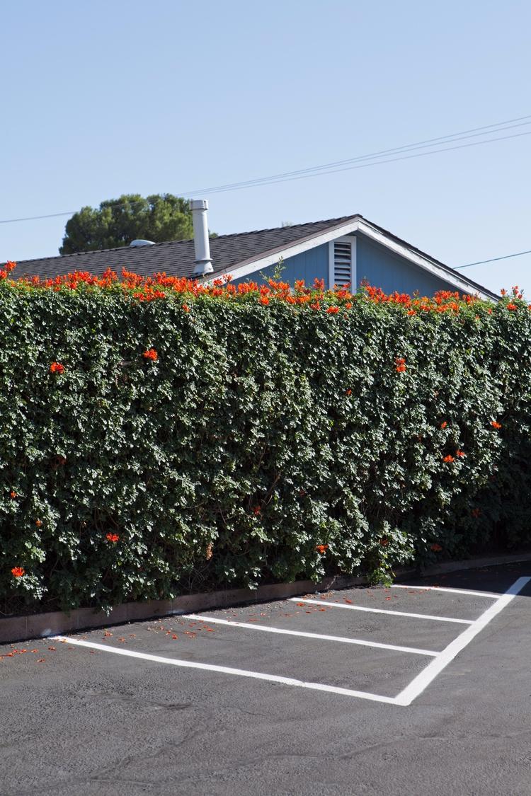House, Hedge, Parking Lot, La C - odouglas | ello