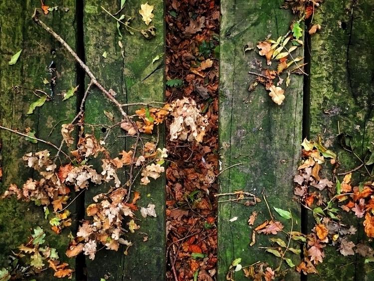 Fallen oak leaves branches - autumn - davidhawkinsweeks | ello