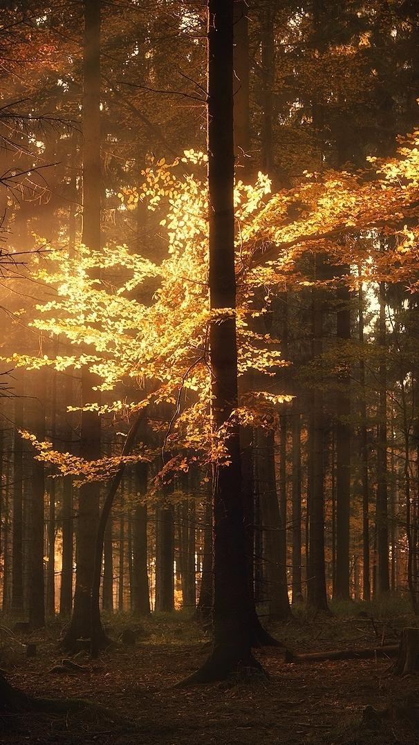 Autumn magical... season light  - felixinden | ello