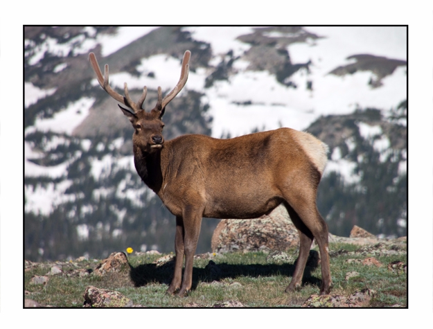Elk, Rocky Mountain National Pa - etbtravelphotography | ello