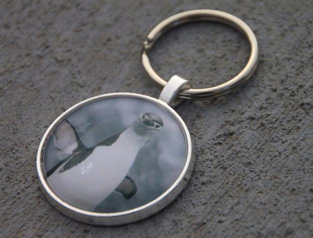 Chinstrap Penguin Key Chain, An - etbtravelphotography | ello
