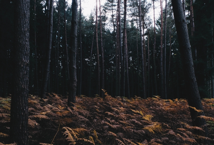 fall, autumn, forest, woods, nature - blackwyrt | ello