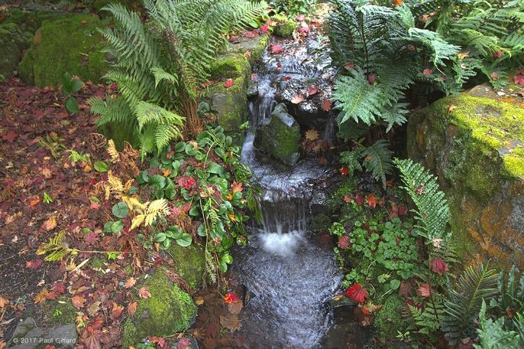 Title: 'Stream Autumn' - (hdr i - paulgillard | ello