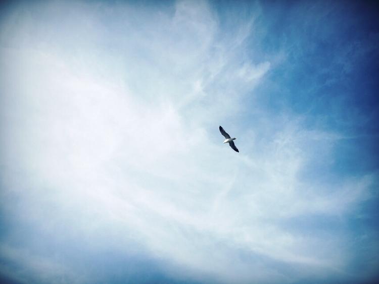 Fly sky - adampawlik | ello