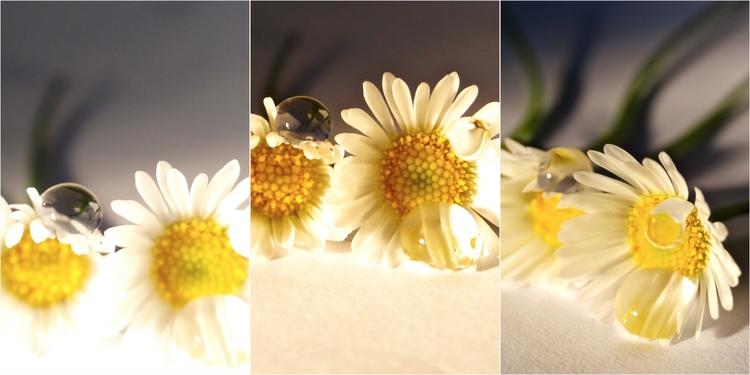 bit happiness - sad daisies dro - dropshot | ello