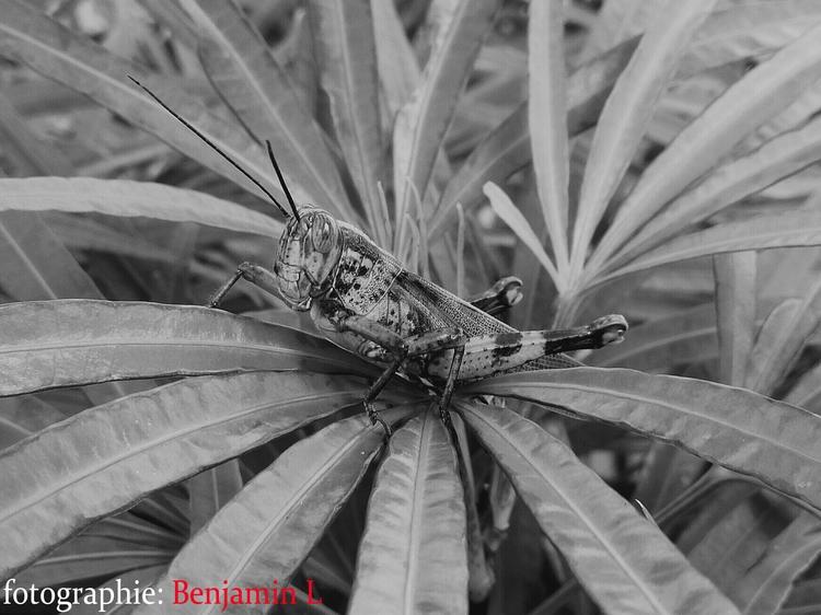 Grasshopper. Mate 9 - Huawei - order0069 | ello