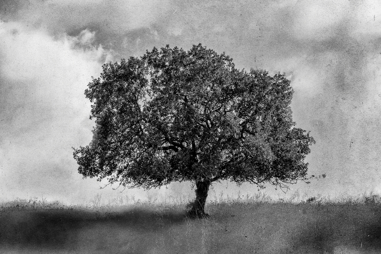 shadow life - photography, monochromatic - elhanans | ello