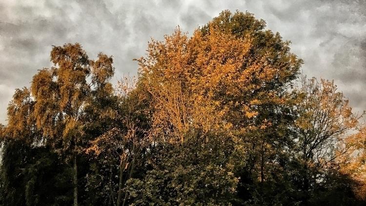 Early morning light tree tops - nature - davidhawkinsweeks | ello