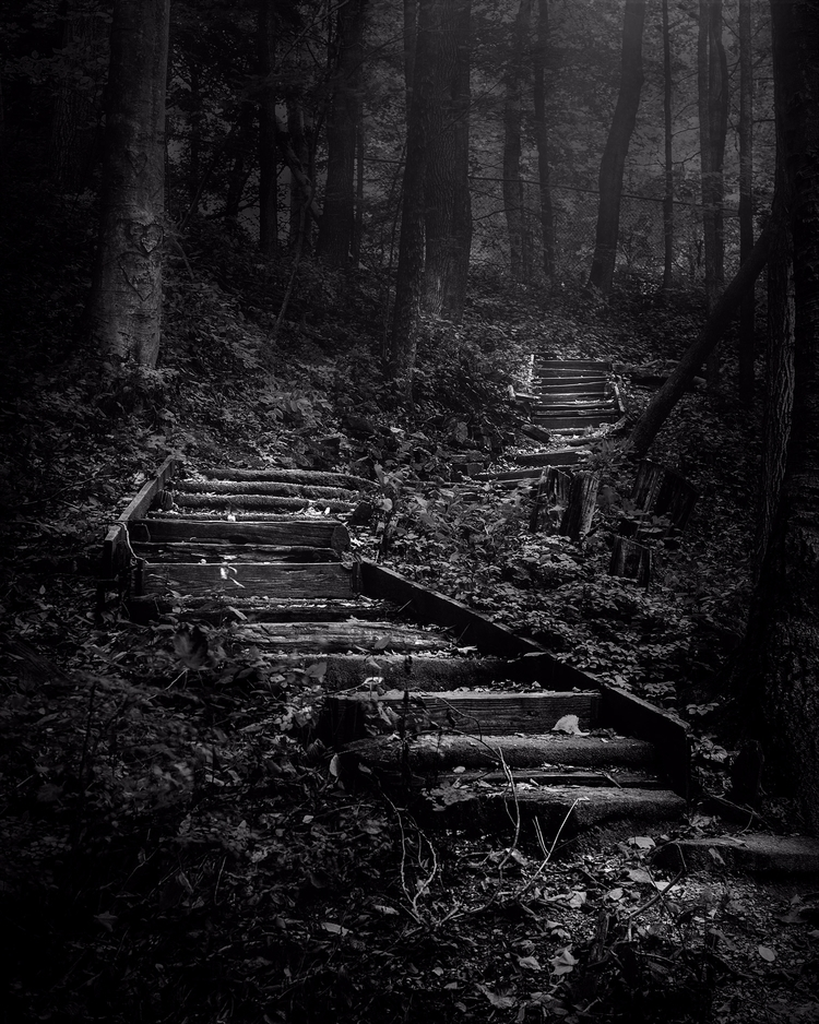 "forest, lose path astray."" –Geo - scottnorrisphotography 