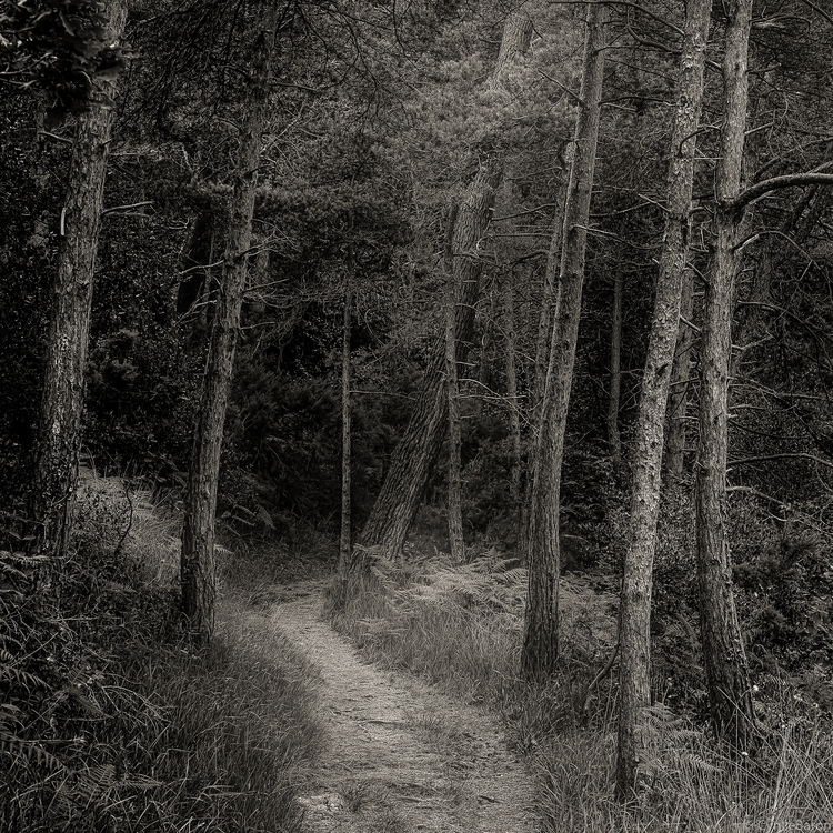 woods - Sigma, Brittany - cyrille_baron | ello
