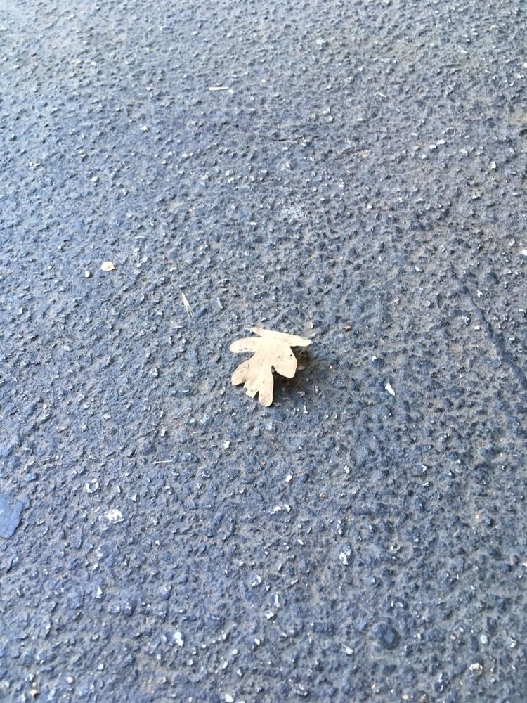 Oak Leaf - mbrown65 | ello
