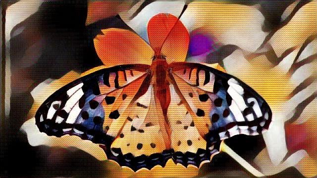 Butterflies Morphing. Page: Mus - drakre52   ello