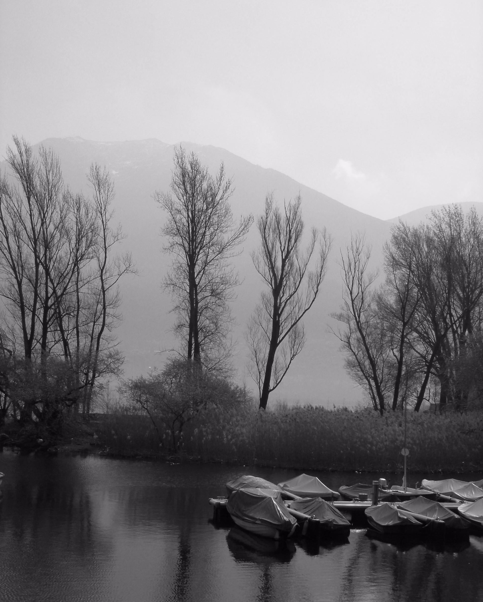photography, lake, tree, blackwhite - ivop | ello