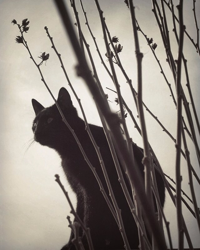 blackandwhite, cat - domiprim | ello