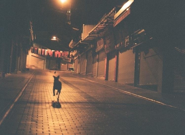 dogs rule city - istanbul, film - riceballthief | ello