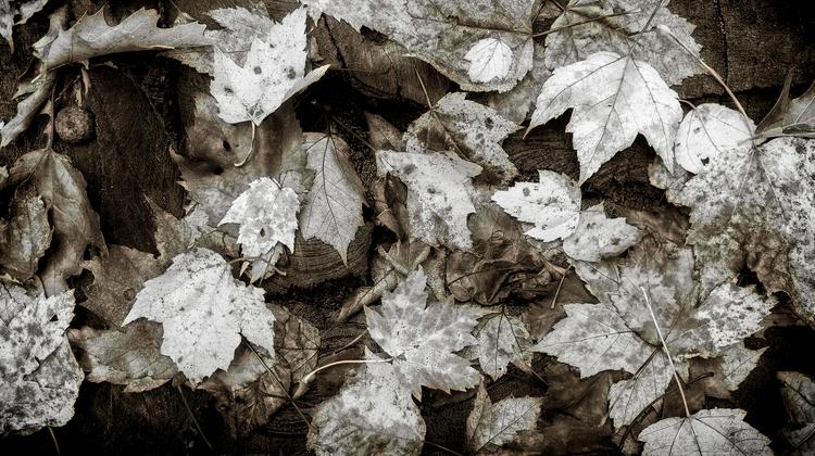 autumn leaves stump forest univ - docdenny | ello