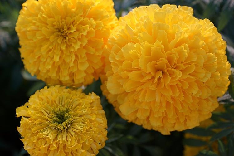 Diwali message world - DiwaliGreetings - viyali | ello