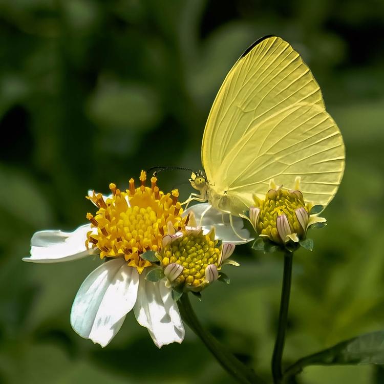 small flowers butterfly walk - danileis | ello