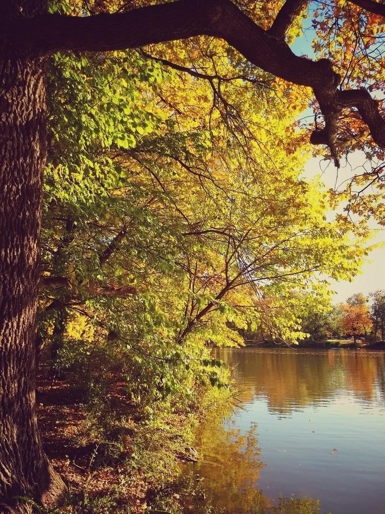 park, sun, tree, autumn, lake - claudio_g_c | ello