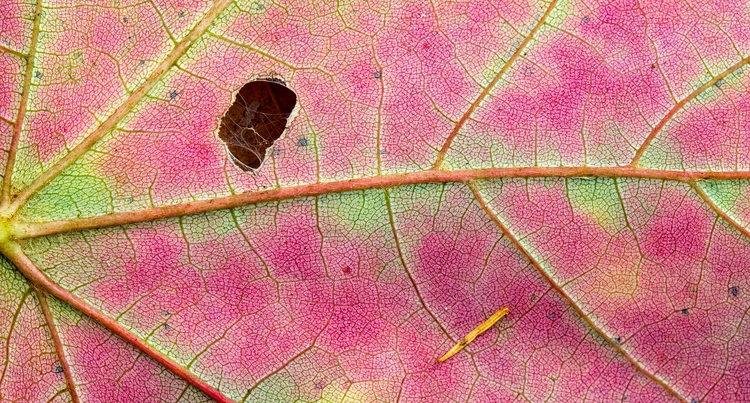 underside leaf forest universit - docdenny | ello