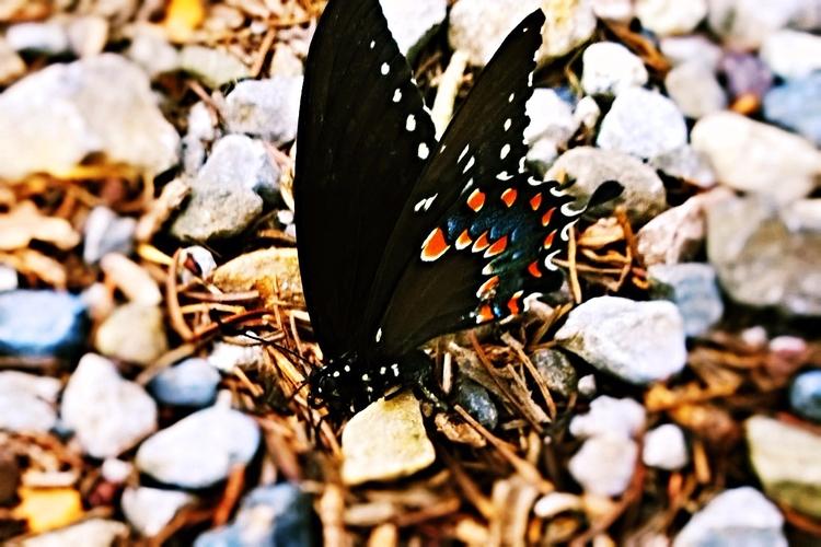 caterpillar calls world, master - jmfministry | ello