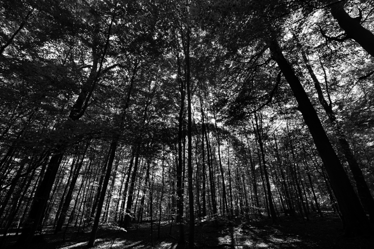 photography, blackandwhite, tree - lorseau | ello