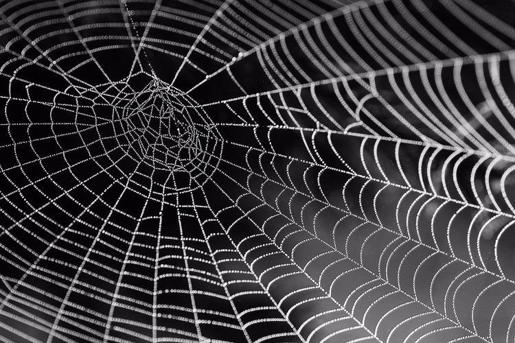 spiders creepy, differently - nature - adaptnetwork | ello