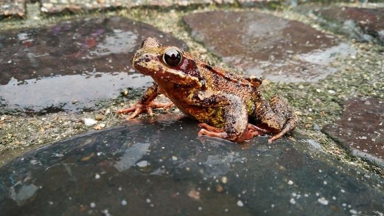 Frog Rain ⁽ᵀᵃᵏᵉᶰ ʷᶦᵗʰ ᵗʰᵉ ᵒᶰᵉᵖᶫ - wvw001 | ello